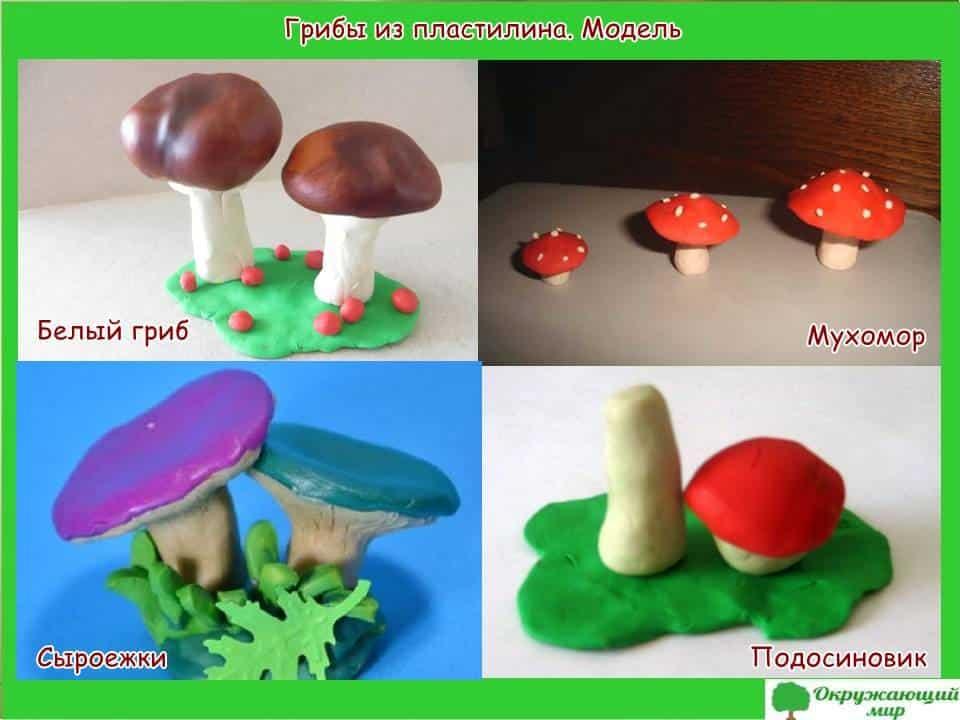 Модель грибов из пластилина