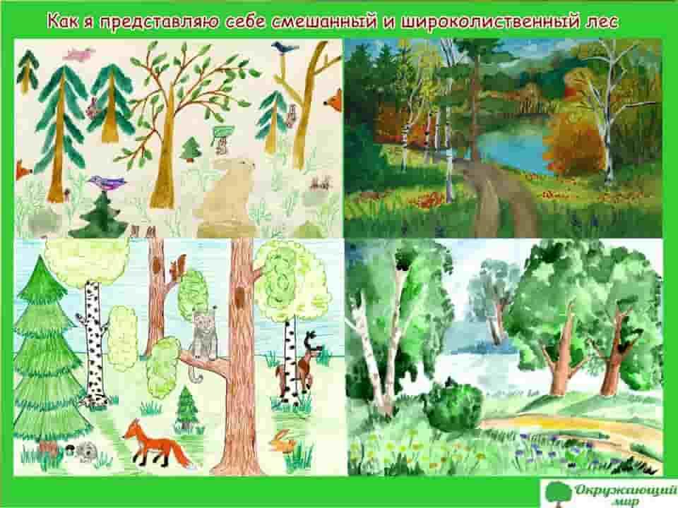 Как я себе представляю смешанный и широколиственный лес