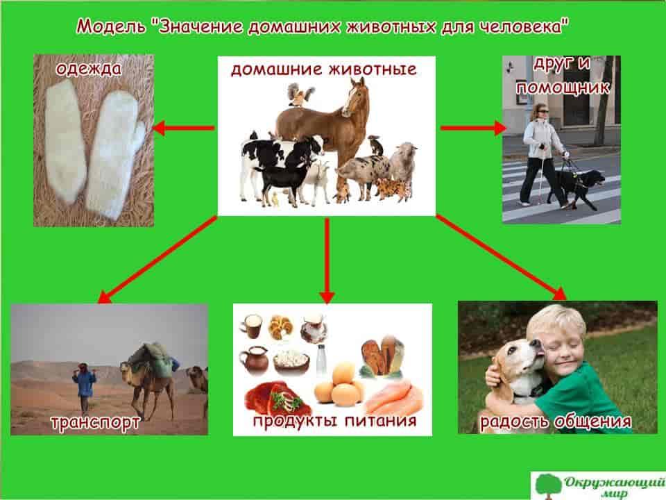 """Модель """"Значение домашних животных для человека"""""""
