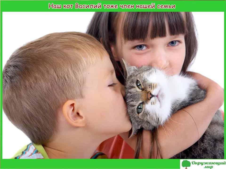 Наш кот Василий тоже член нашей семьи