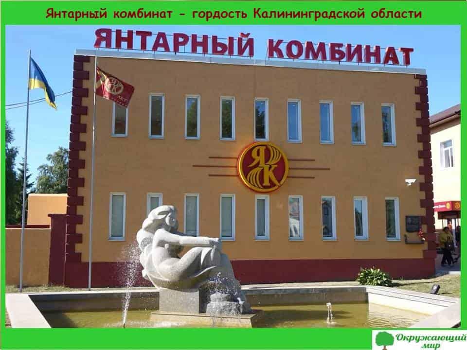 Янтарный комбинат - гордость Калининградской области