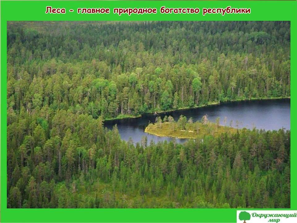 Леса природное богатство России