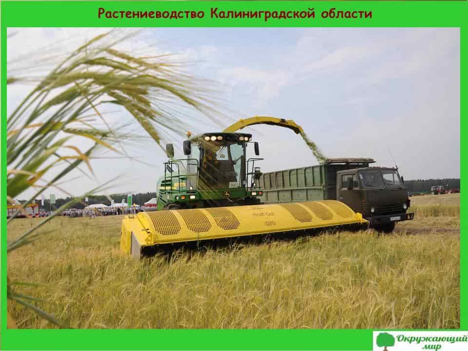 Растениеводство Калининградской области