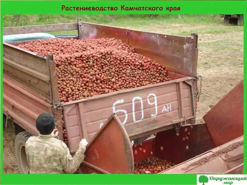 Растениеводство Камчатского края