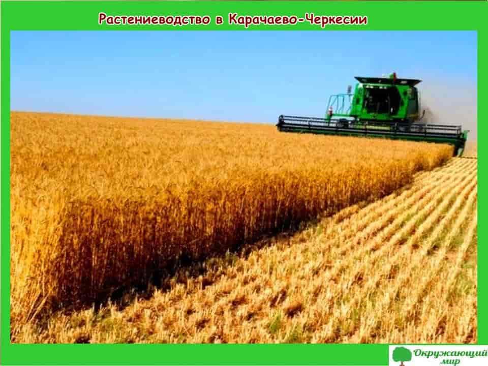 Растениеводство в Карачаево-Черкесии
