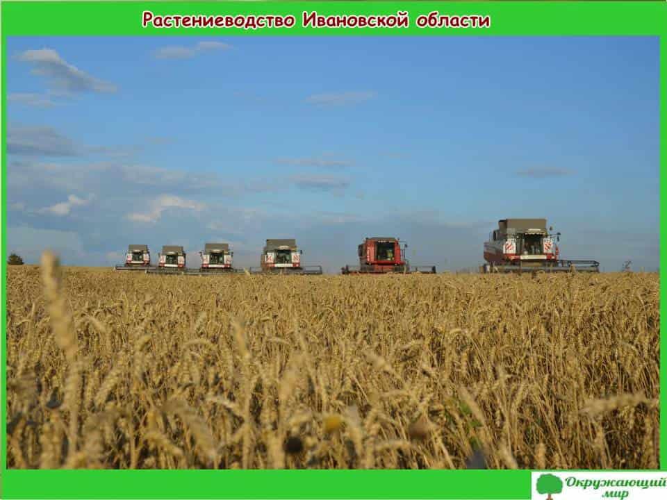 Растениеводство Ивановской области