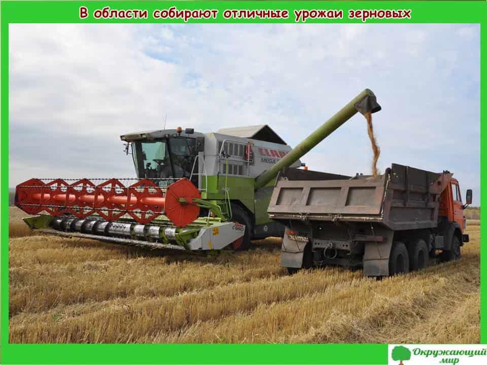 В области собирают отличные урожаи зерновых