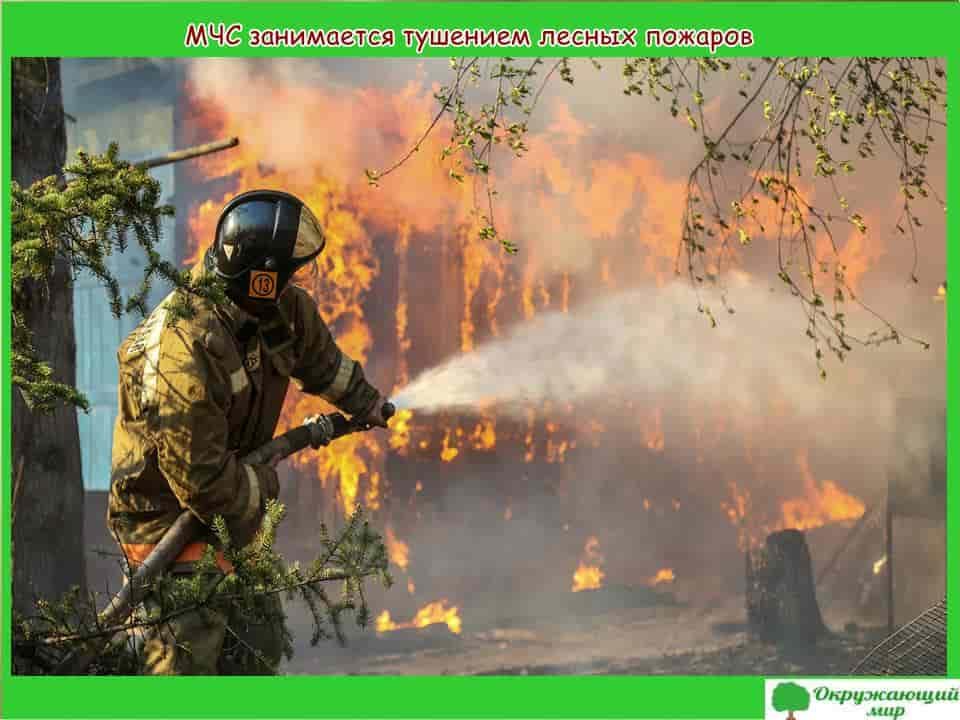 МЧС занимается тушением лесных пожаров
