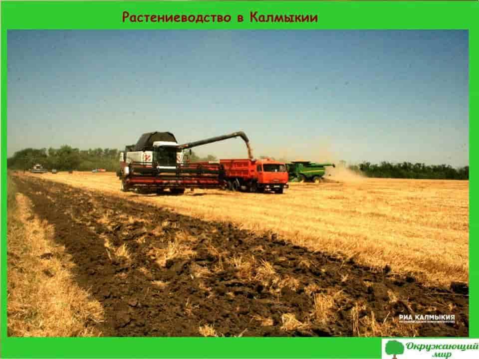 Растениеводство в Калмыкии