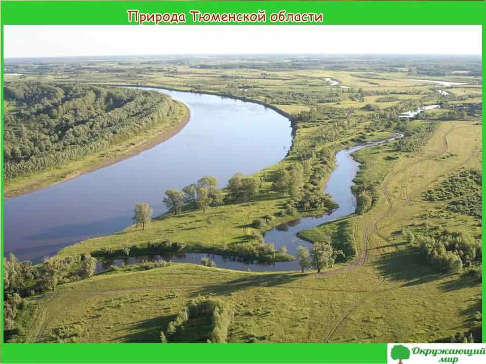 Природа Тюменской области
