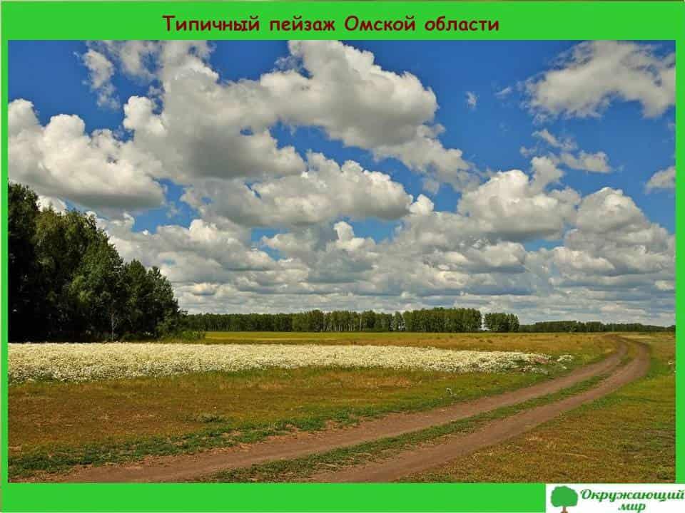Типичный пейзаж Омской области