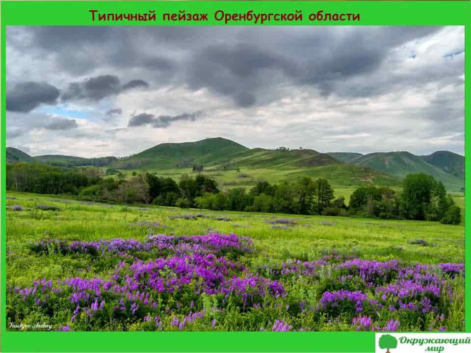 Типичный пейзаж Оренбуржской области