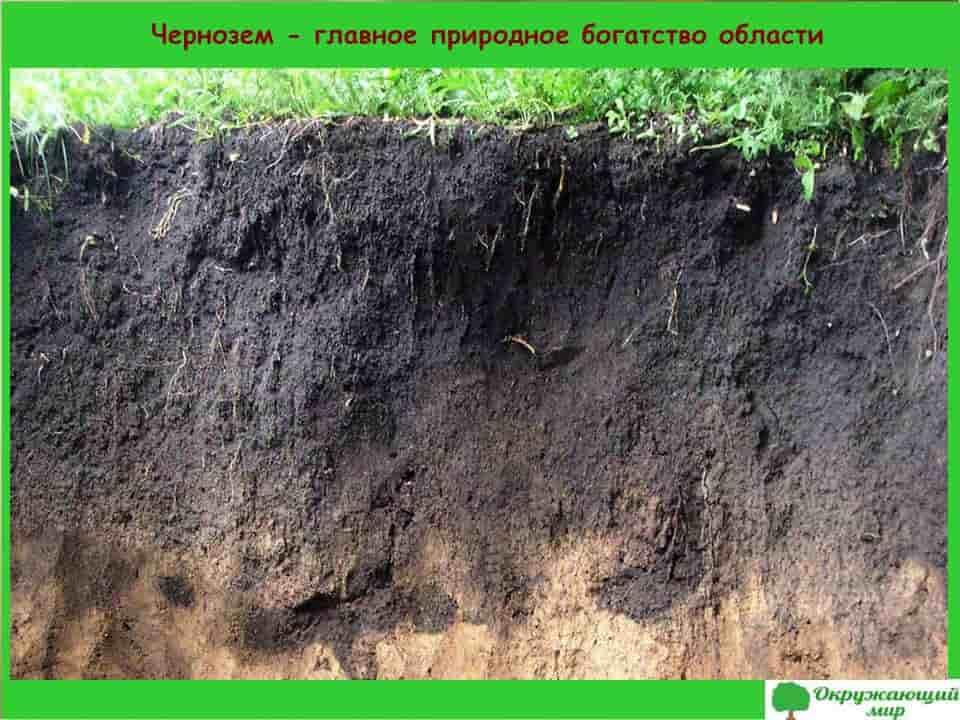 Чернозем-главное богатство Липецкой области