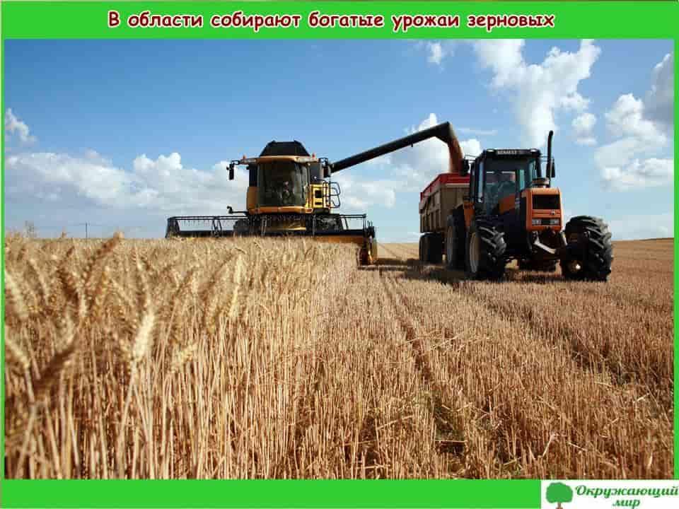 4. В области собирают богатые урожаи зерновых
