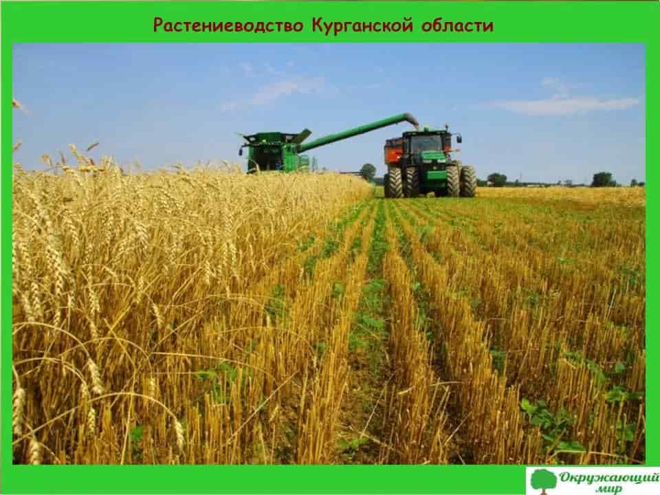 Растениеводство Курганской области