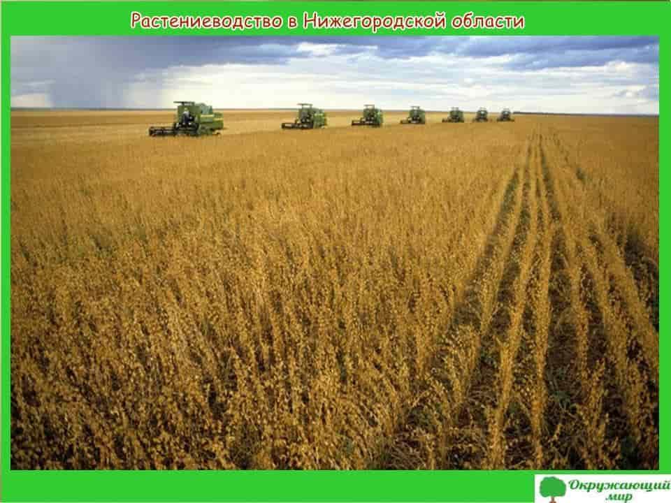 Растениеводство в Нижегородской области