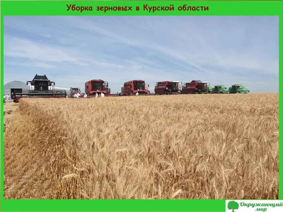 Уборка зерновых в Курской области области