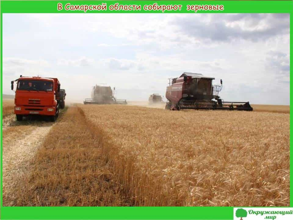 В Самарской области собирают зерновые
