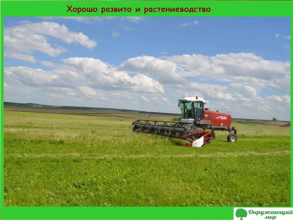 Хорошо развито и растениеводство