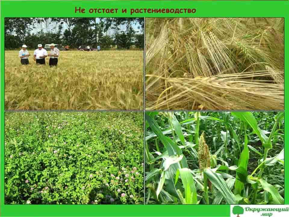 Не отстает и растениеводство