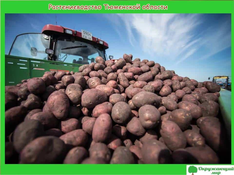 Растениеводство Тюменской области