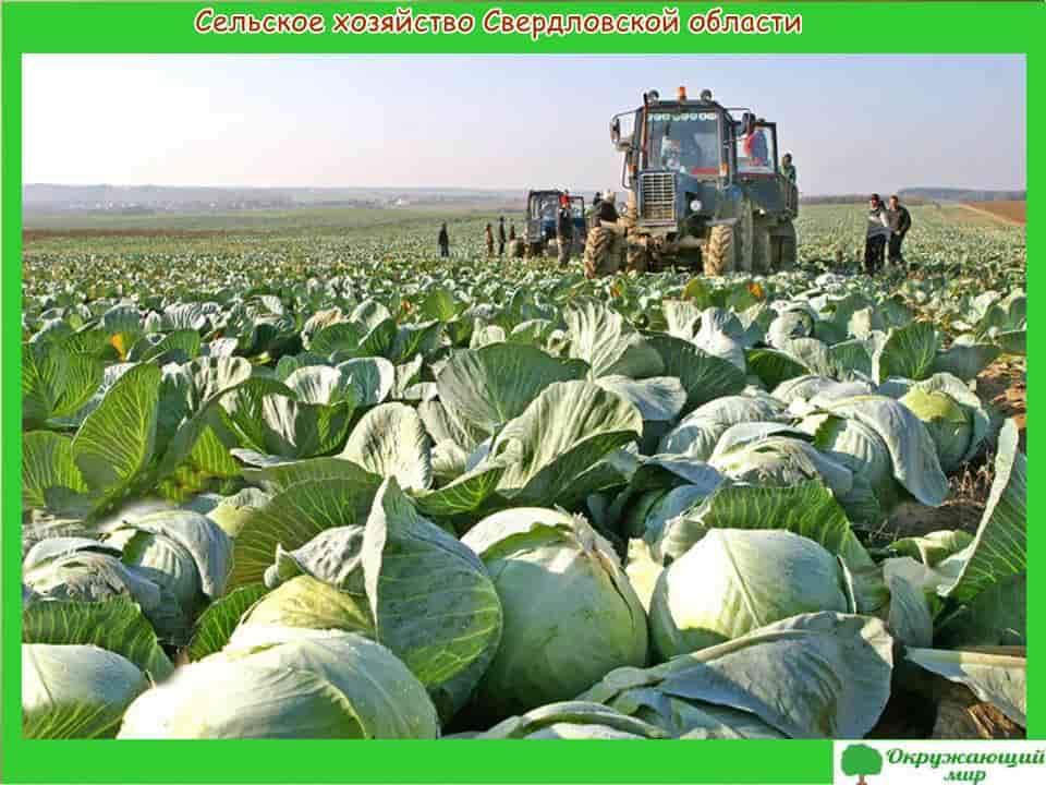 Сельское хозяйство Свердловской области