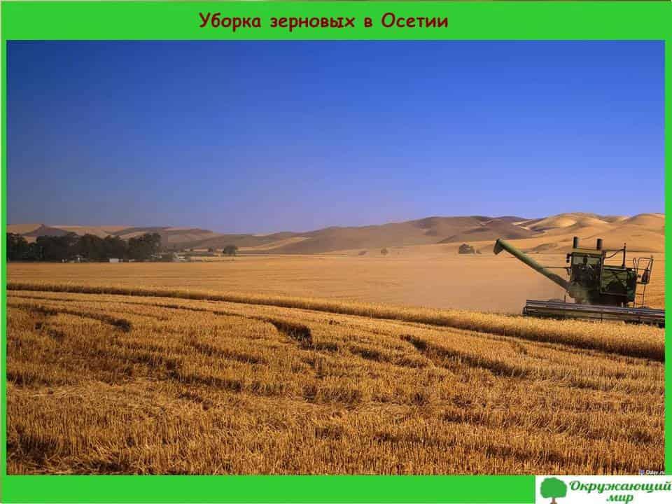 Уборка зерновых в Осетии