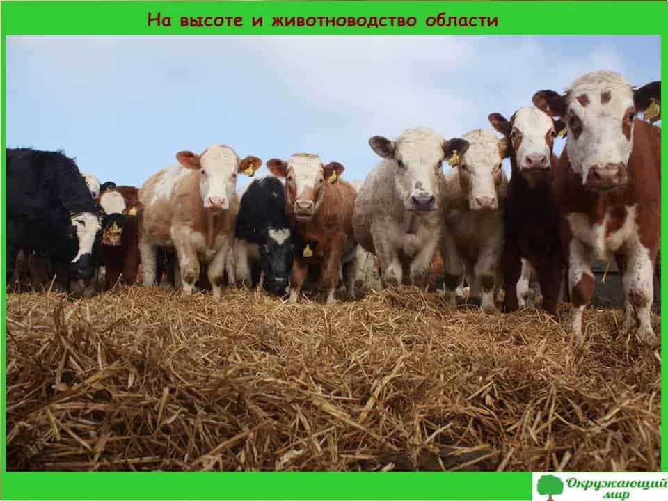 На высоте и животноводство области