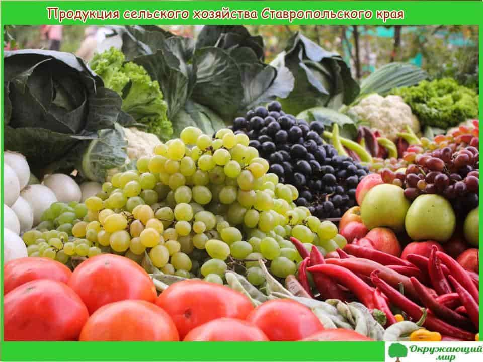 Продукция сельского хозяйства Ставропольского края