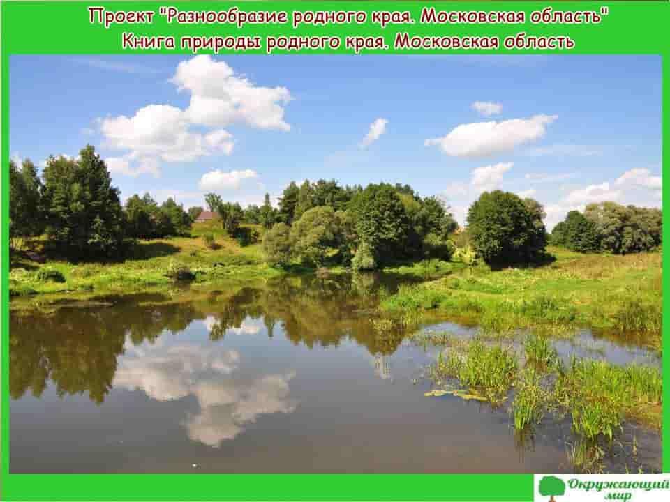 Проект разнообразие природы родного края Московская область