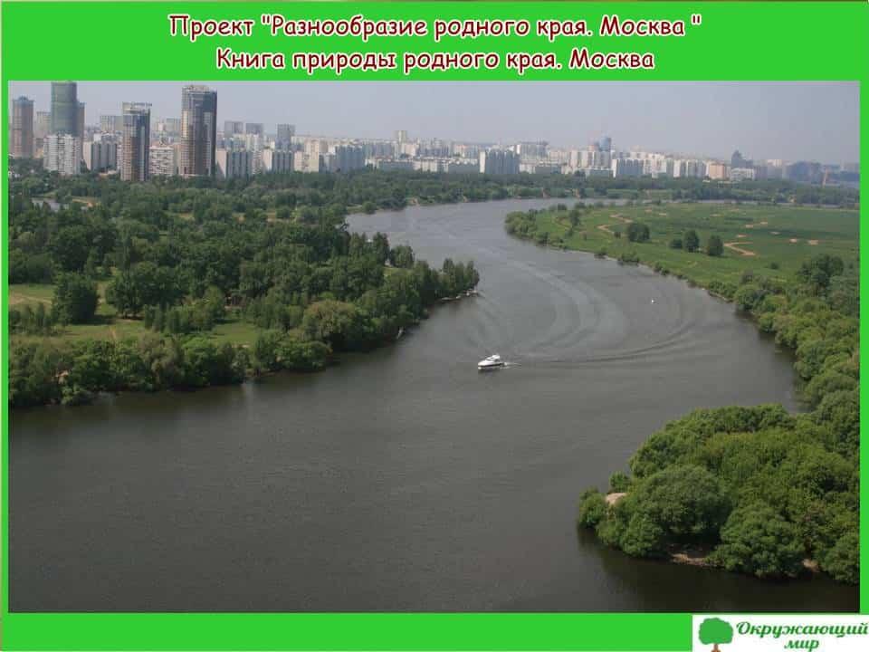 Проект Разнообразие природы родного края - Москва