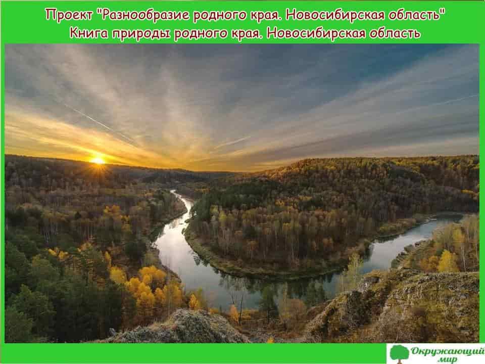 Проект разнообразие природы родного края Новосибирская область