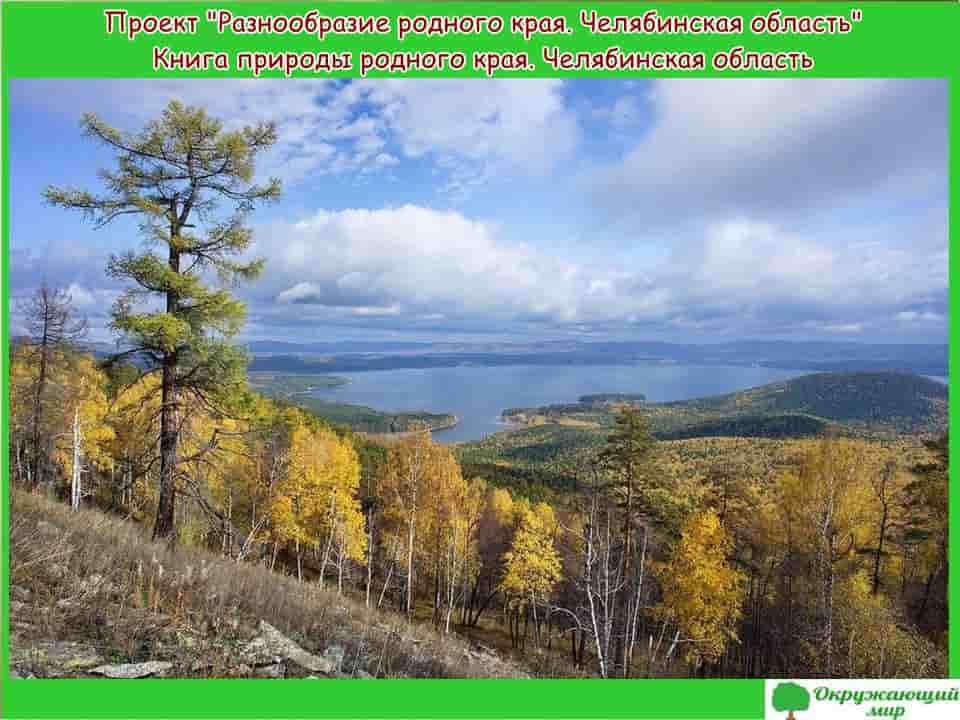 Проект Разнообразие родного края Челябинская область