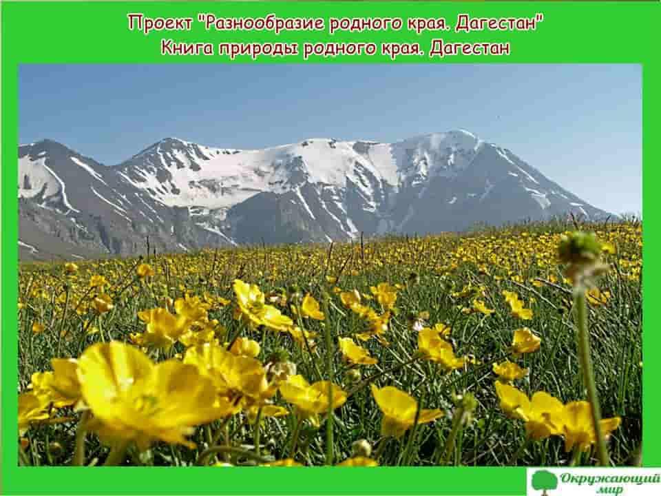 Проект Разнообразие родного края Дагестан