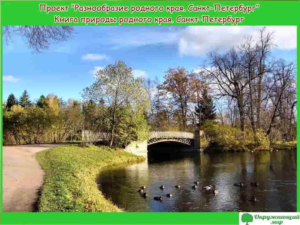 Разнообразие природы родного края Санкт Петербург
