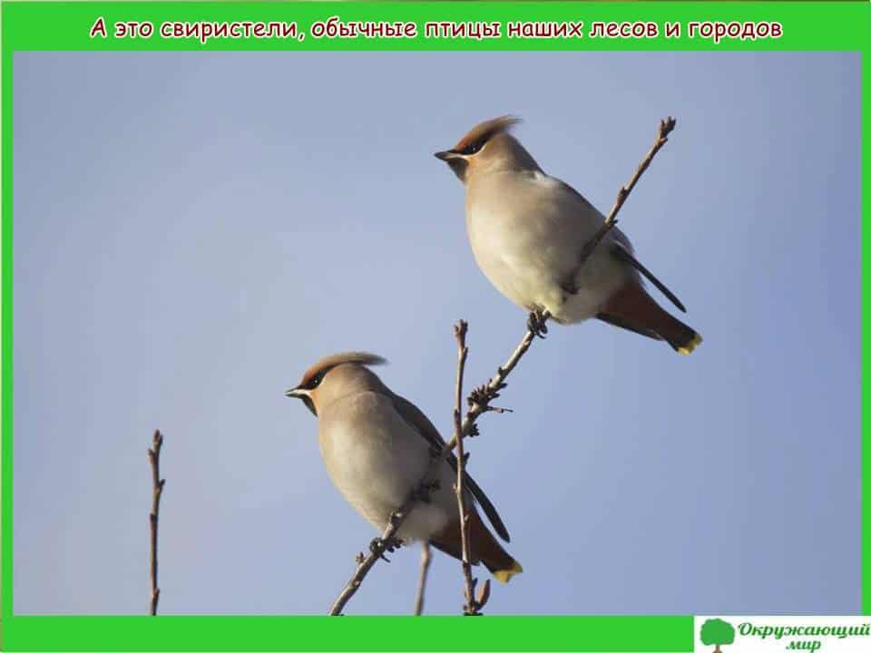 Птицы Мордовии