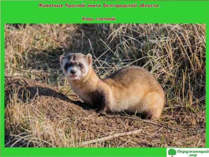 Животные Красной книги Белгородской области