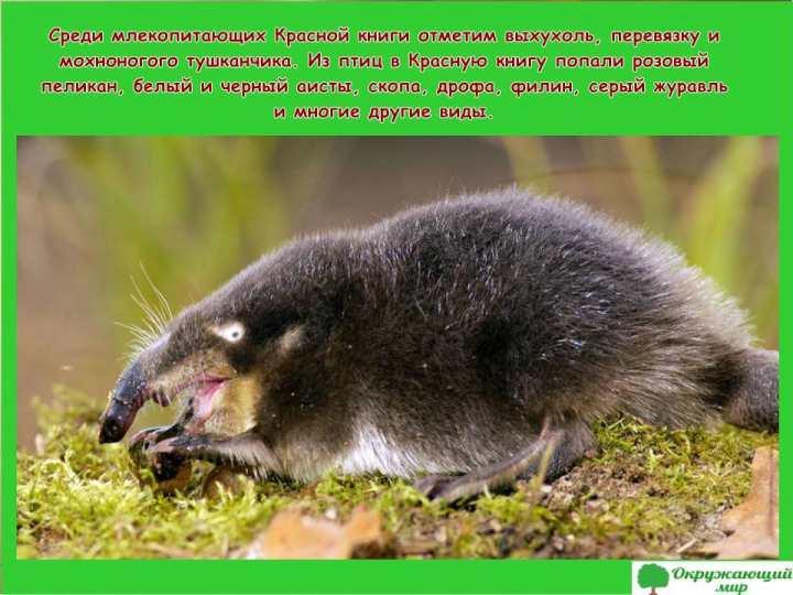Животные Красной книги Волгоградской области