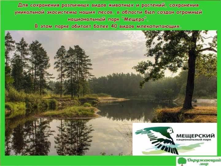 Окружающий мир 3 класс 1 часть Проект Разнообразие природы родного края - Владимирская область 11
