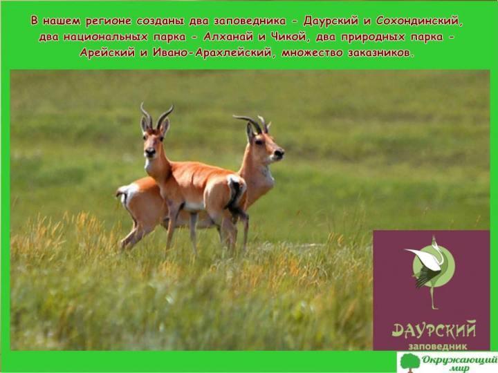 Заповедники Забайкальского края