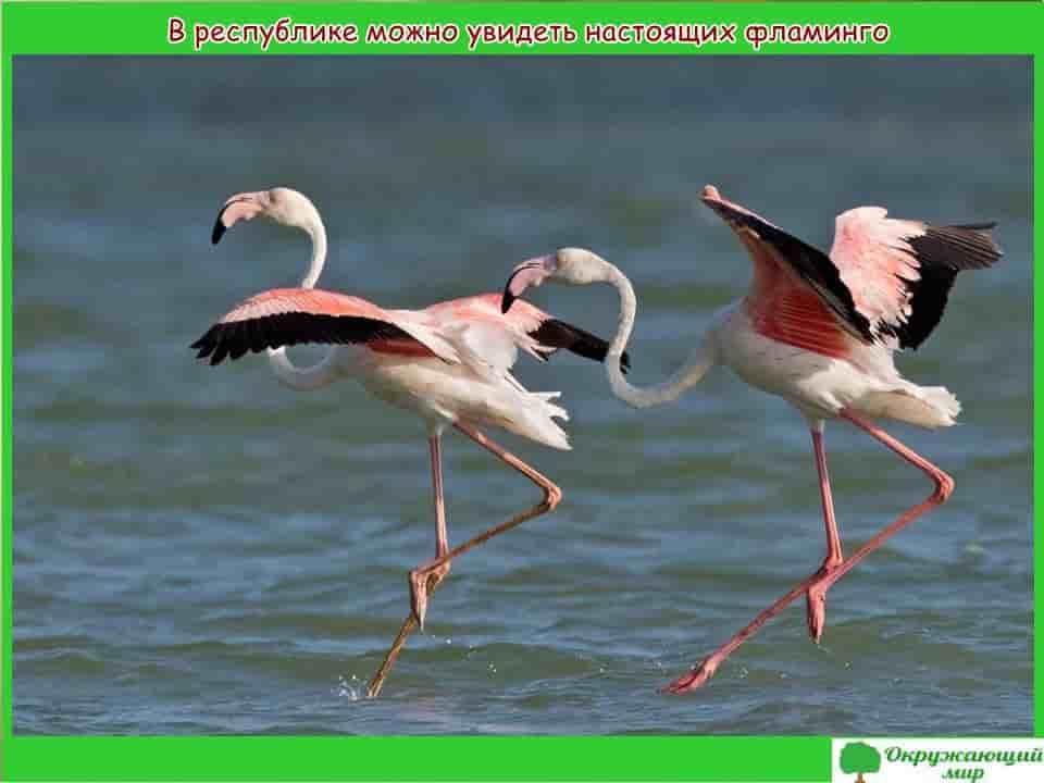 Птицы Татарстана