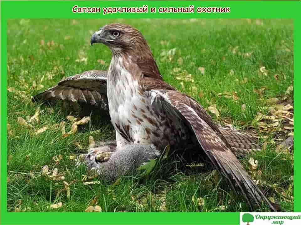 Птицы Новосибирска