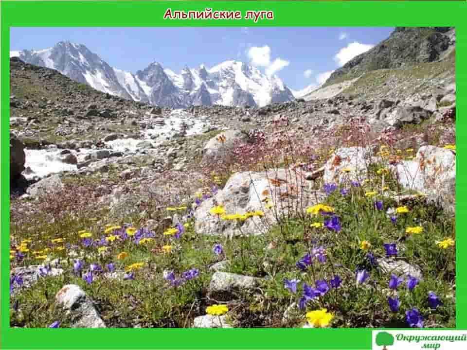 Альпийские леса Дагестана