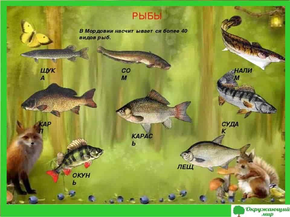Рыбы Мордовии