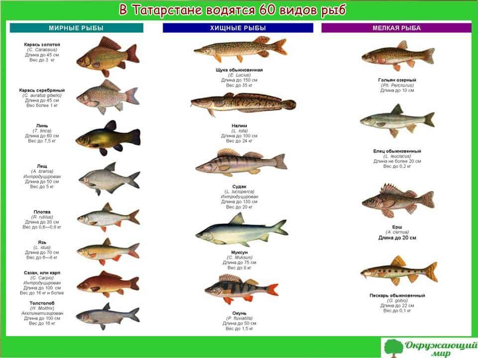 Рыбы Татарстана