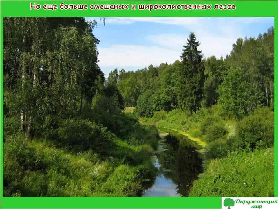 Леса Татарстана
