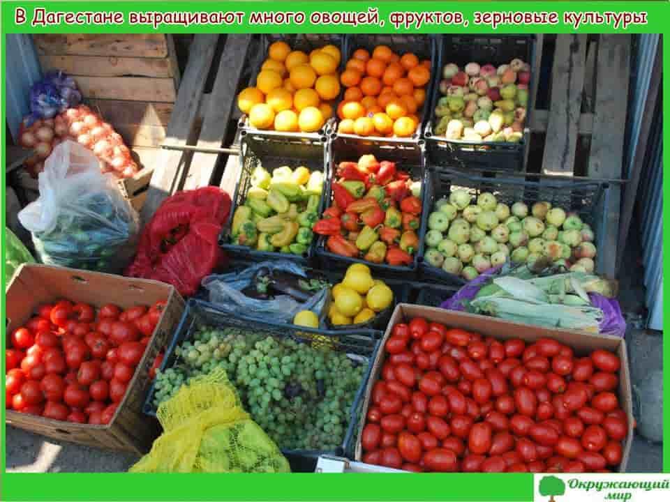Овощи и фрукты Дагестана