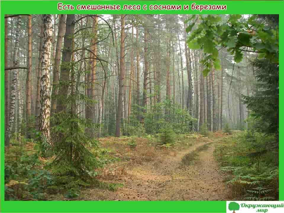 Смешанные леса Московской области