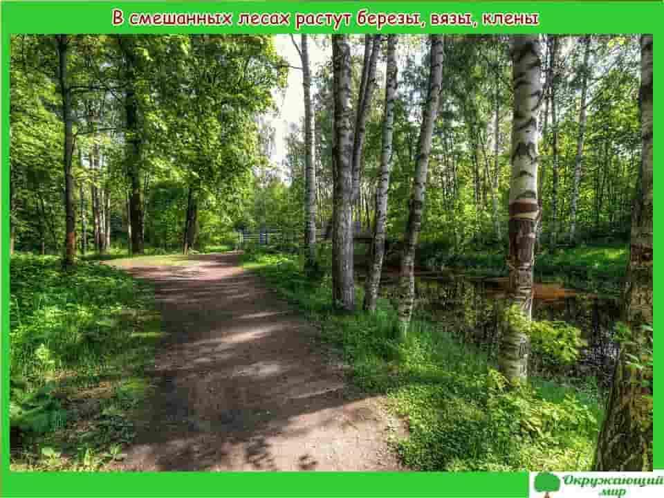 Смешанные леса Санкт-Петербурга