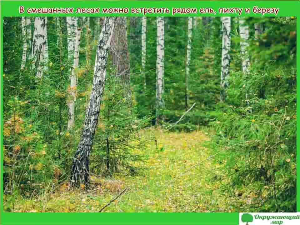 Смешанные леса Свердловской области